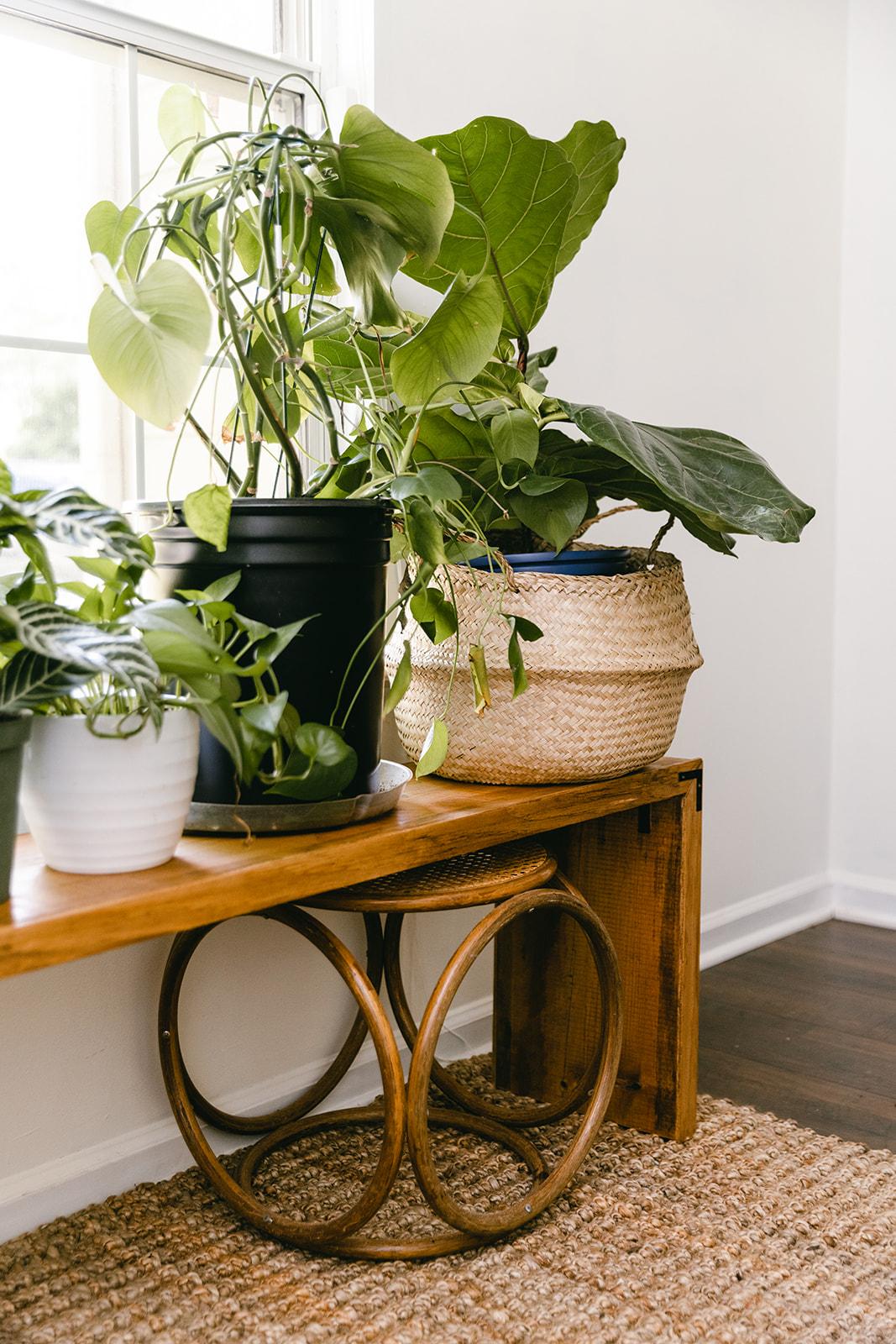 diy plant bench
